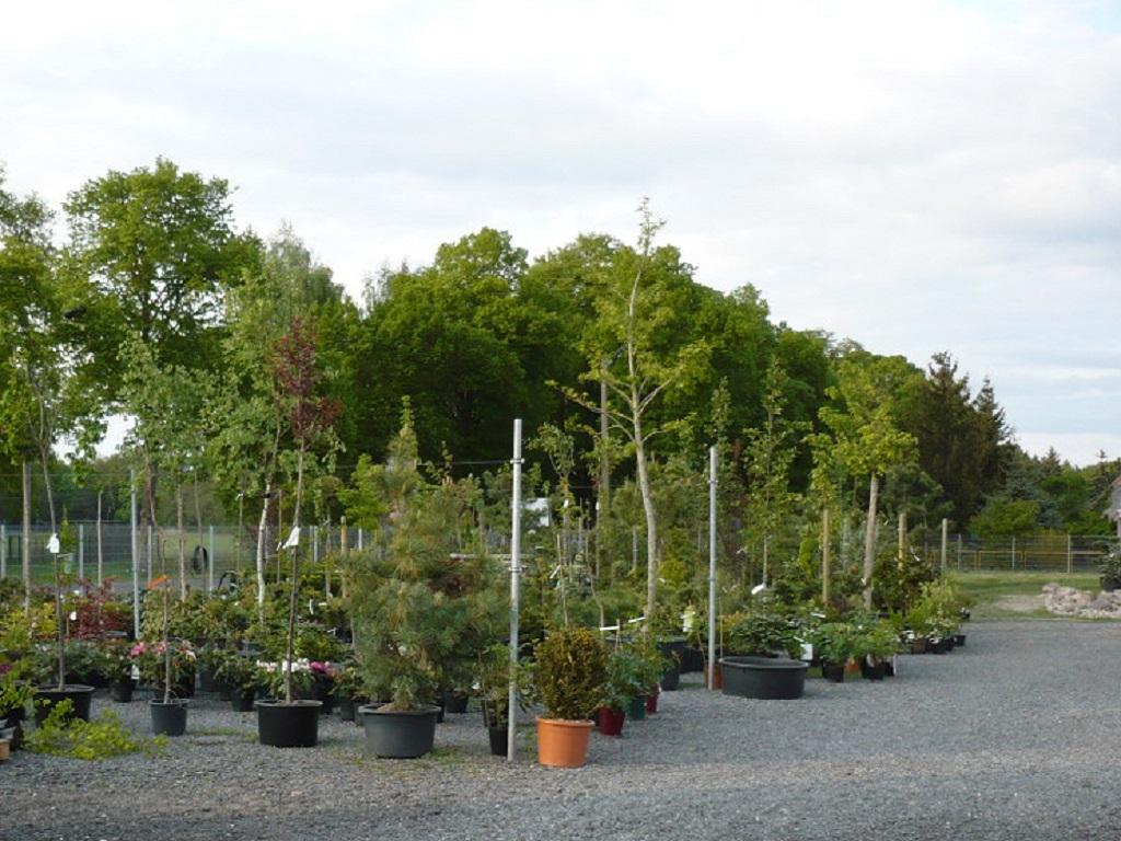 Pflanzen geh lze klose luckenwalde ihr pflanzenexperte for Berlin pflanzen